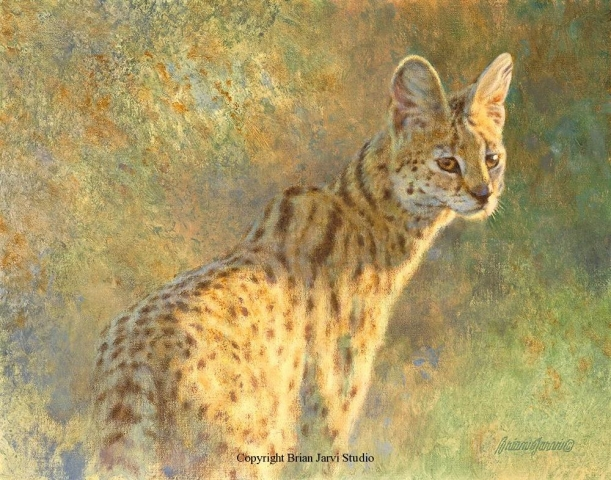 "Serval Study 11"" x 14"" - Sold <B><font size=""2"" color=""red""><br>This Original has been sold and is in a private collection</font></B> - Brian Jarvi Studios Studies for African Menagerie Paintings Brian Jarvi Originals"