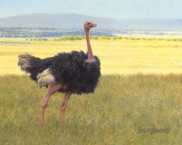 "Shadow & Light - Ostrich <br> 8"" x 10"" <B><font size=""2"" color=""red""><br>This Original has been sold and is in a private collection</font></B> - Brian Jarvi Studios African Wildlife Original Art Brian Jarvi Artwork"