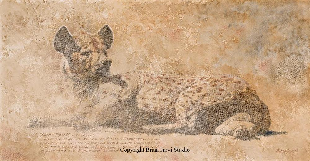 "Spotted Hyena Study - 23"" x 12"" - Sold <B><font size=""2"" color=""red""><br>This Original has been sold and is in a private collection</font></B> - Brian Jarvi Studios Studies for African Menagerie Paintings Brian Jarvi Originals"