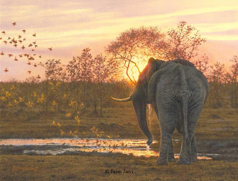 "Sundowners<br> Original Oil 19"" x 25"" <B><font size=""2"" color=""red""><br>This Original has been sold and is in a private collection</font></B> - Brian Jarvi Studios African Wildlife Original Art Brian Jarvi Artwork"