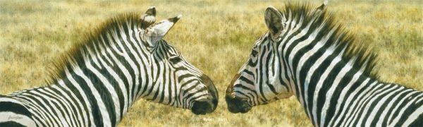 The Greeting - Zebras - Brian Jarvi Studios Brian Jarvi Artwork Limited Edition Prints