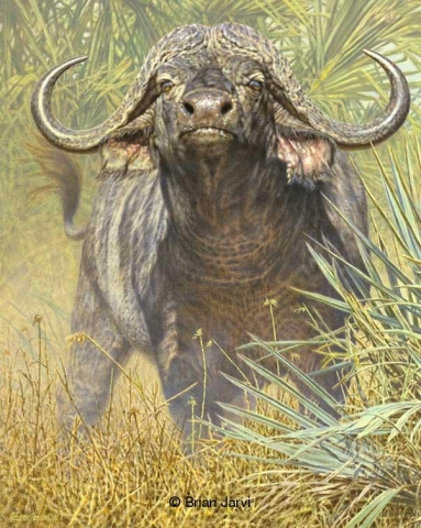 "The Intrepid - Cape Buffalo<br>Original Oil 24"" x 30"" <B><font size=""2"" color=""red""><br>This Original has been sold and is in a private collection</font></B> - Brian Jarvi Studios African Wildlife Original Art Brian Jarvi Artwork"