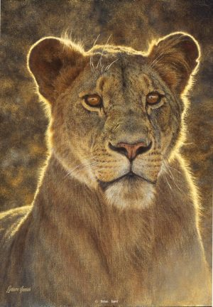 The Lioness - African Lioness - Brian Jarvi Studios Brian Jarvi Artwork Limited Edition Prints