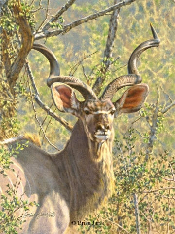 "The Prince - African Kudu <br> Original Oil 16"" x 12"" <B><font size=""2"" color=""red""><br>This Original has been sold and is in a private collection</font></B> - Brian Jarvi Studios African Wildlife Original Art Brian Jarvi Artwork"