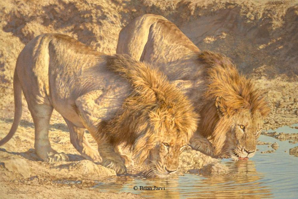 "The Sated - African Lions <br>Original Oil 36"" x 54"" <B><font size=""2"" color=""red""><br>This Original has been sold and is in a private collection</font></B> - Brian Jarvi Studios African Wildlife Original Art Brian Jarvi Artwork"