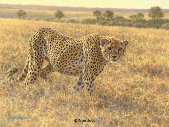 "The Solitary Hunter - Cheetah<br> Original Oil 16"" x 12"" <B><font size=""2"" color=""red""><br>This Original has been sold and is in a private collection</font></B> - Brian Jarvi Studios African Wildlife Original Art Brian Jarvi Artwork"