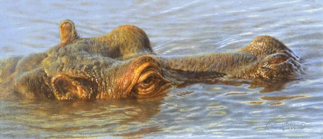 "The Submersible - Hippo <br> 6"" x 14"" <B><font size=""2"" color=""red""><br>This Original has been sold and is in a private collection</font></B> - Brian Jarvi Studios African Wildlife Original Art Brian Jarvi Artwork"
