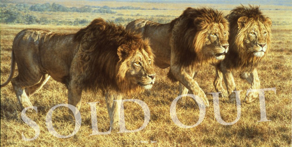 Tour De Force - African Lions - Brian Jarvi Studios Brian Jarvi Artwork Limited Edition Prints