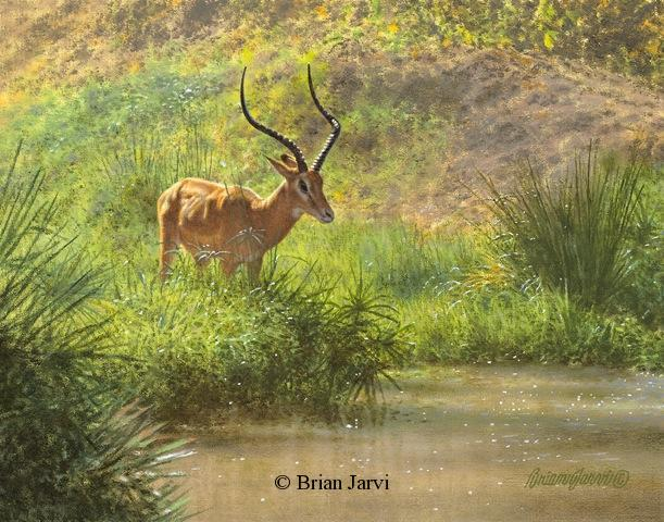 "Trepidation - Antelope at the waterhole <br> Original Oil 11"" x 14"" <B><font size=""2"" color=""red""><br>This Original has been sold and is in a private collection</font></B> - Brian Jarvi Studios African Wildlife Original Art Brian Jarvi Artwork"