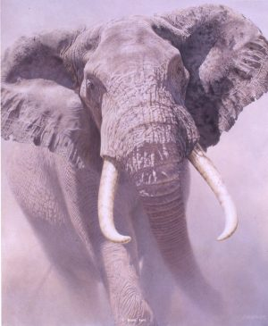 Tusk - African Elephant - Brian Jarvi Studios Brian Jarvi Artwork Limited Edition Prints
