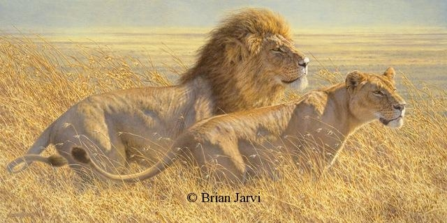 "Winds of Change - African Lions <br> Original Oil 26"" x 52"" <B><font size=""2"" color=""red""><br>This Original has been sold and is in a private collection</font></B> - Brian Jarvi Studios African Wildlife Original Art Brian Jarvi Artwork"