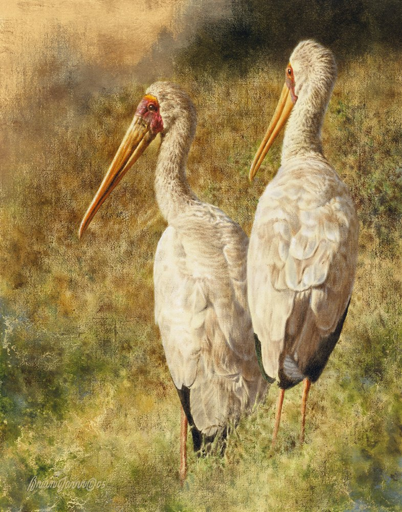"""Yellow-billed Storks"" – Giclee Canvas"