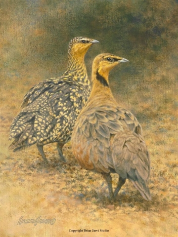 "Yellowthroated Sandgrouse 9"" x 12"" - Sold <B><font size=""2"" color=""red""><br>This Original has been sold and is in a private collection</font></B> - Brian Jarvi Studios Studies for African Menagerie Paintings Brian Jarvi Originals"