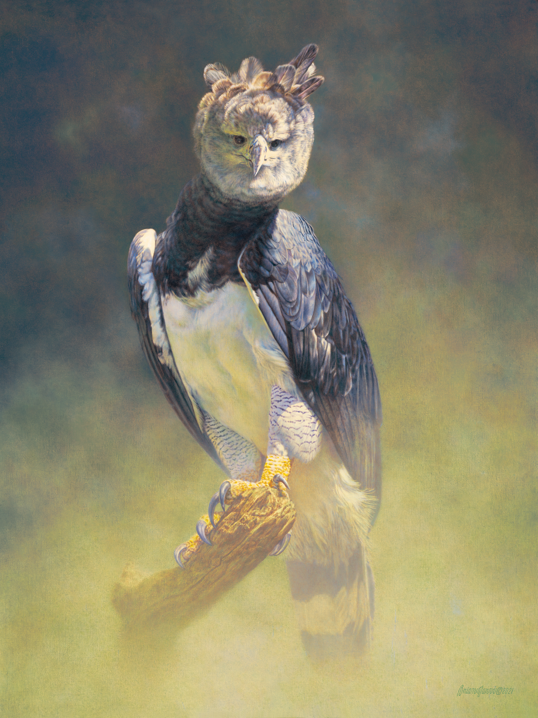 """The Empress of Selva"" - Harpy Eagle Original 36 x 48 - Brian Jarvi - Sold"